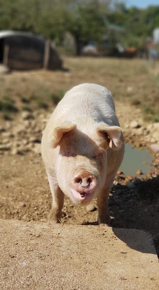 Ferme les Porcs du Plateau