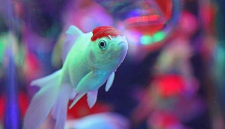 TOKYO FISH
