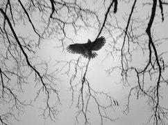 Photographie par VINRECH FREDERIC