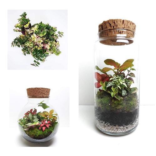 Workshop terrarium + plantjes stekken