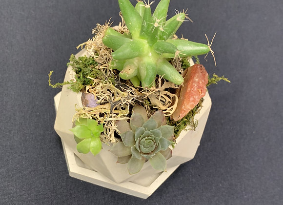 Succulent Arrangement Pot- Small