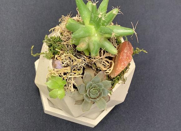 Succulent Arrangement Pot- Small