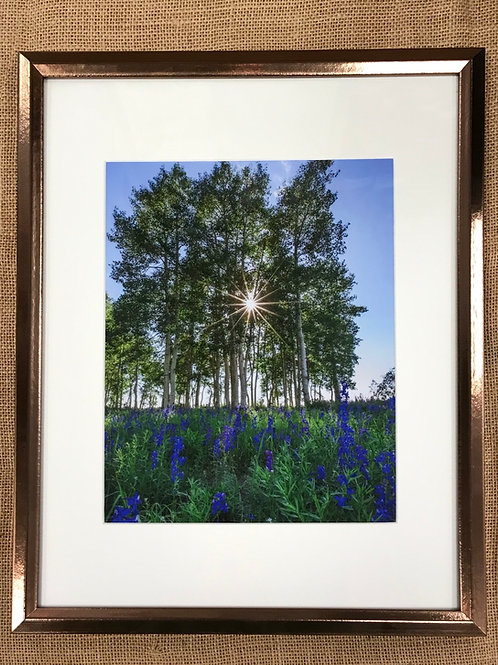 Summer Brilliance Framed Print by Darlene Smith