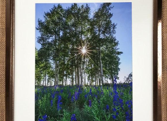 Summer Brilliance Framed Print by Darlene Smith