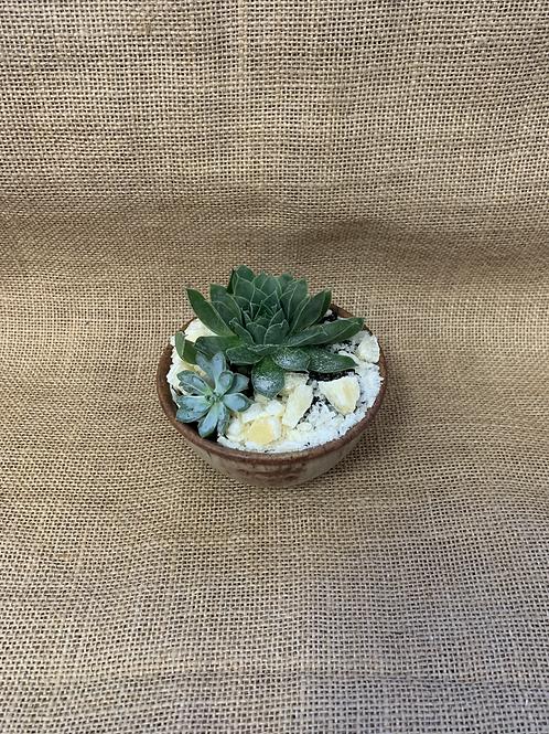 Succulent Arrangement Pot