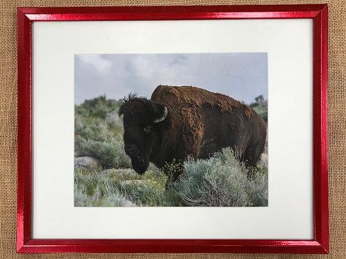 Bison Framed Print by Darlene Smith