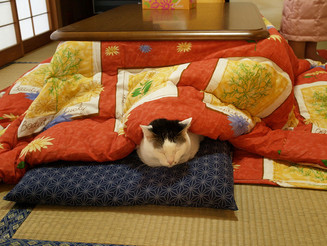 Kotatsu: The Way The Japanese Stay Warm in Winter