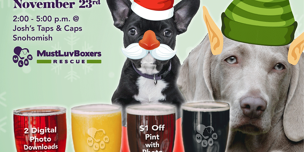Boxers, Brews, & Other Dogs Too - Pet Holiday Photos!