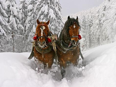 Скоро зима - время кататься на санях