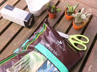 Wedding DIY : Composition de cactus et succulente