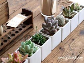 Centre de table cactus