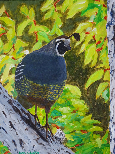 Quail in the Walnut Tree