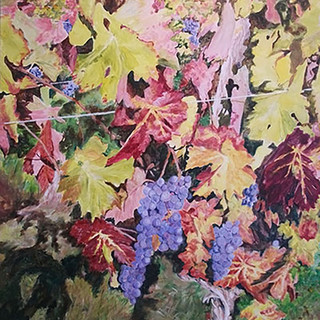 Colour in the Vineyard