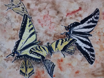 a kaleidescope of swallowtails