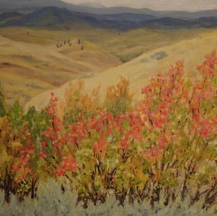 Parrow Grasslands in October