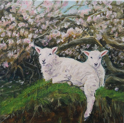 welsh lambs 003 lightbox
