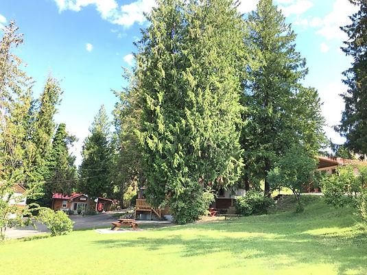 Cabins nestled under the cedar trees.JPG