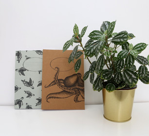 Sea turtles and Octopuse notebooks, 48NIS