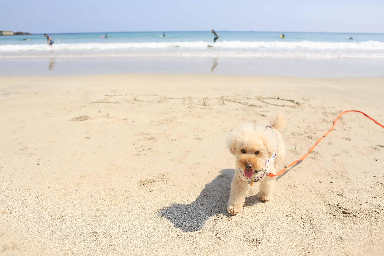 愛犬との特別な日
