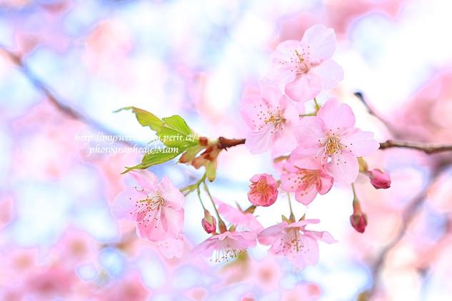 桜photoワークショップのお知らせ