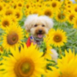 Dog Photo~愛犬ICHIRO