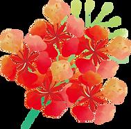 鳳凰花.png