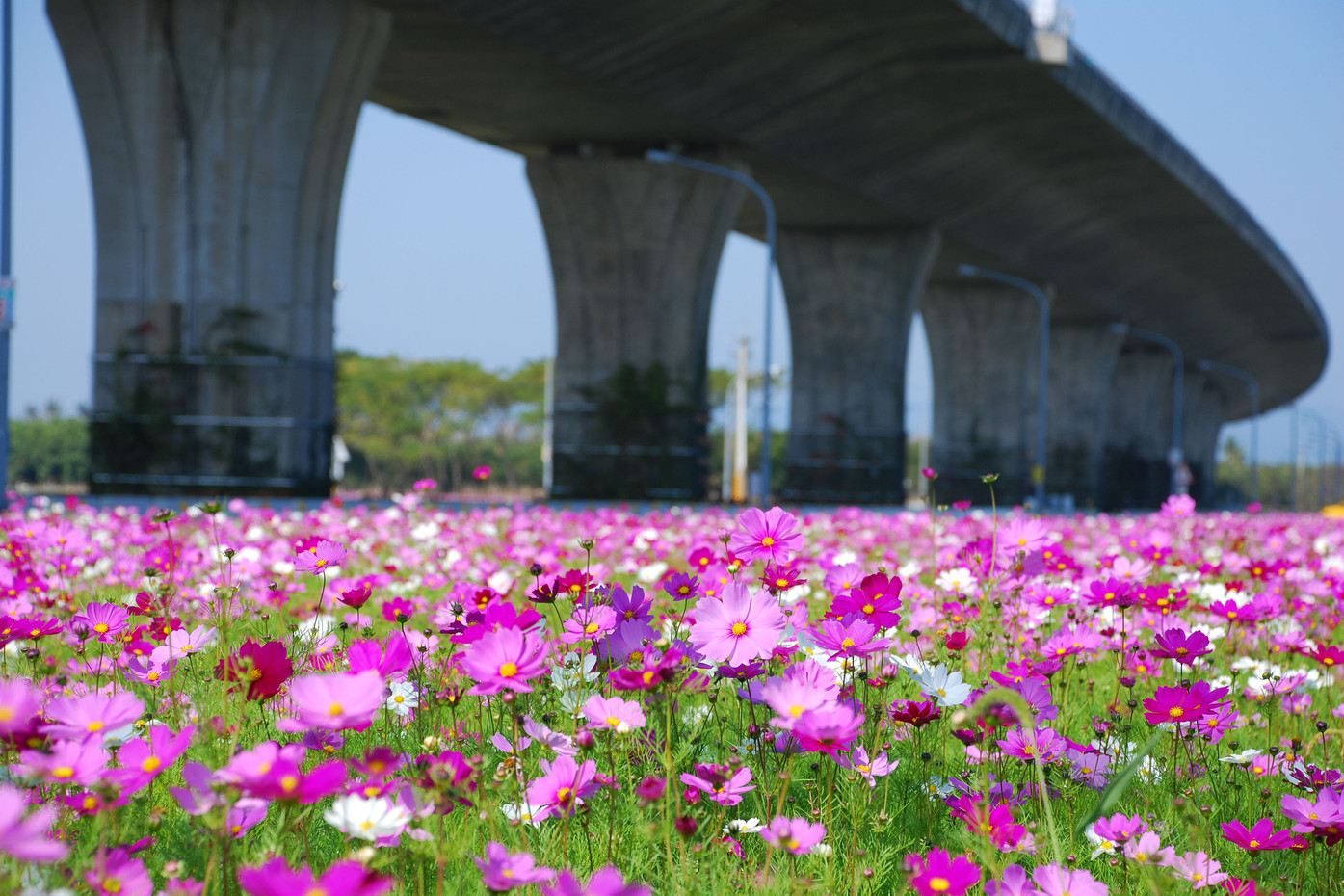 單車國道:蘭花蕨鐵馬道路段