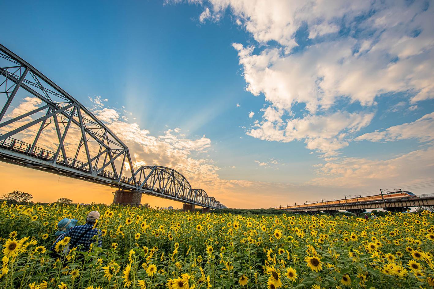 黃榮群-向日葵-下淡水溪鐵橋
