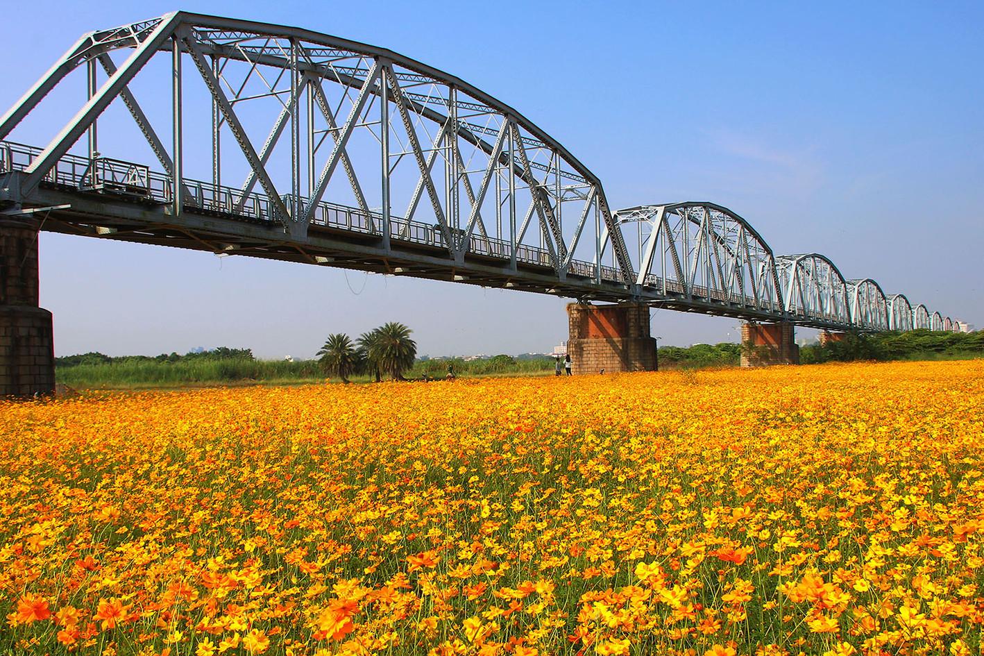 潘志寰-黃波斯菊-下淡水溪鐵橋