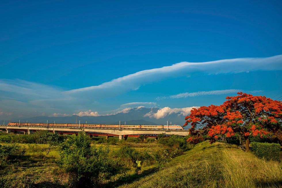 黃榮群-鳳凰木-潮州大橋
