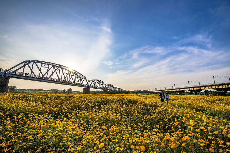 黃榮群-波斯菊-下淡水溪鐵橋