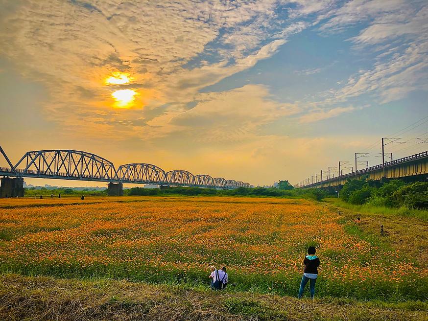 黃婉婷-波斯菊-下淡水溪鐵橋