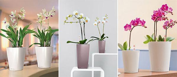 Цеолит для орхидей4.jpg