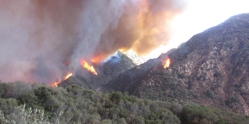 S-290 Int. Fire Behavior