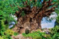 Árvore_.jpeg