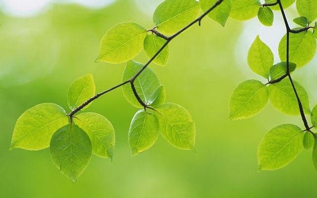 green-leave 6.jpg