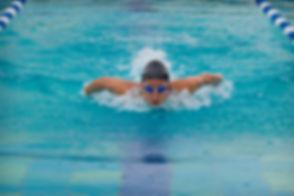 Delfin schwimmen.jpg