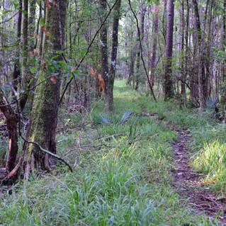 Jericho Swamp