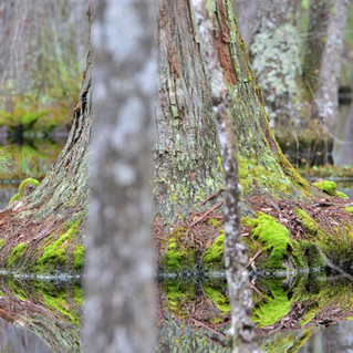 Echaw Creek