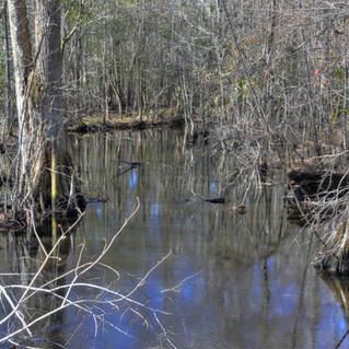 Little Hellhole Swamp