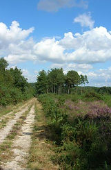 Wareham Forest Way