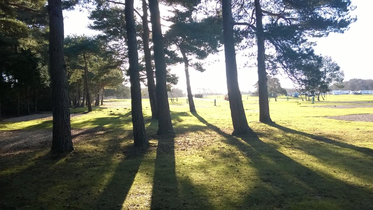 Winter Trees at Bottom of Park