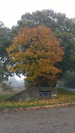 Autumn Entrance on Bere Road