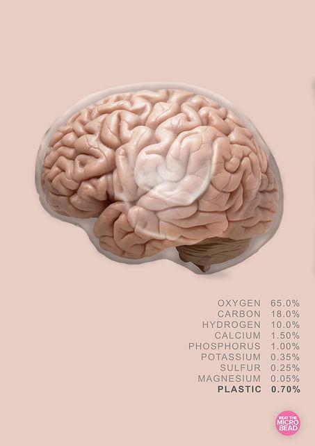 brainfinal.jpg