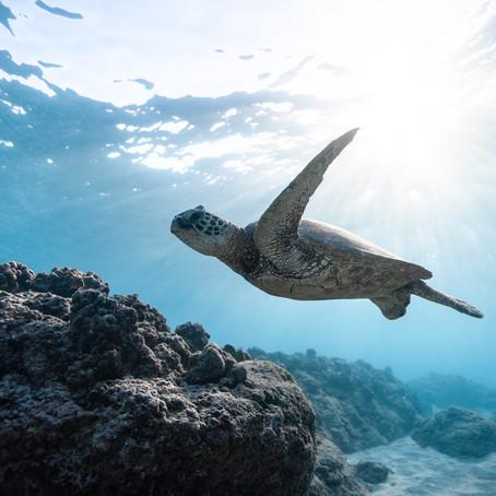 How plastic affects marine life