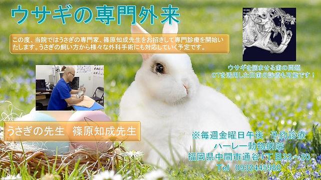 北九州 うさぎ 動物病院 専門
