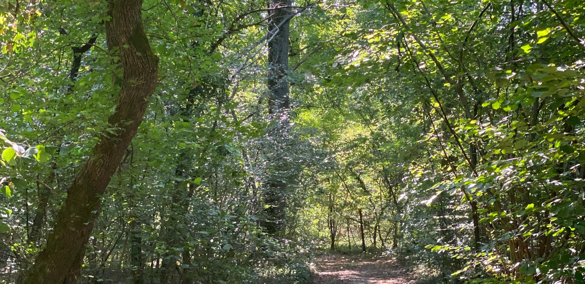 sentiero-nel-bosco-nido-nel-parco