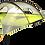 Thumbnail: Stingray_3.0