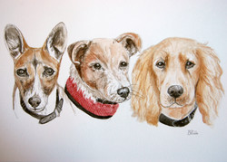 3 dogs judith ford