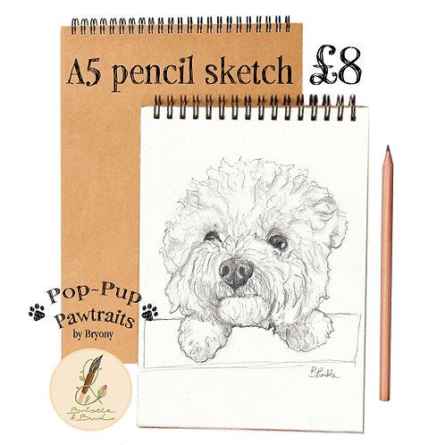 Pop-Pup Pawtraits. Pencil Sketch